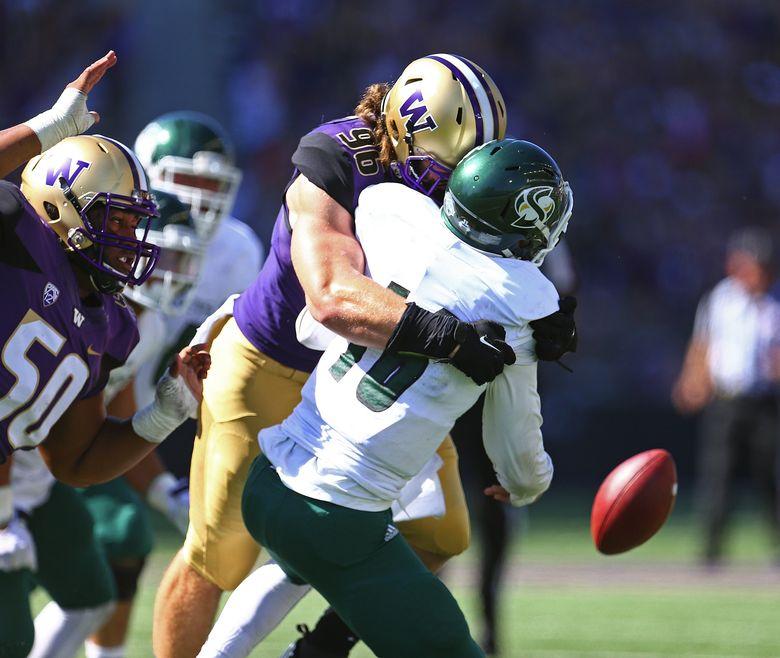 Washington defensive lineman Shane Bowman smothers Sacramento State quarterback Daniel Kniffin in the second half at Husky Stadium. (John Lok / The Seattle Times)