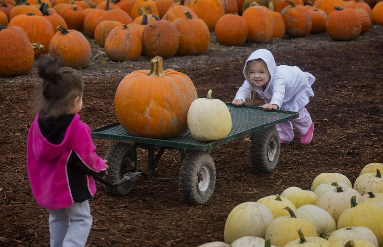 Isabella Wimmer, right, tries to help her sister Alexis with their pumpkins at Carpinito Brothers Pumpkin Patch. There are gourds galore at farms around the Sound.  (Ellen M. Banner/The Seattle Times)