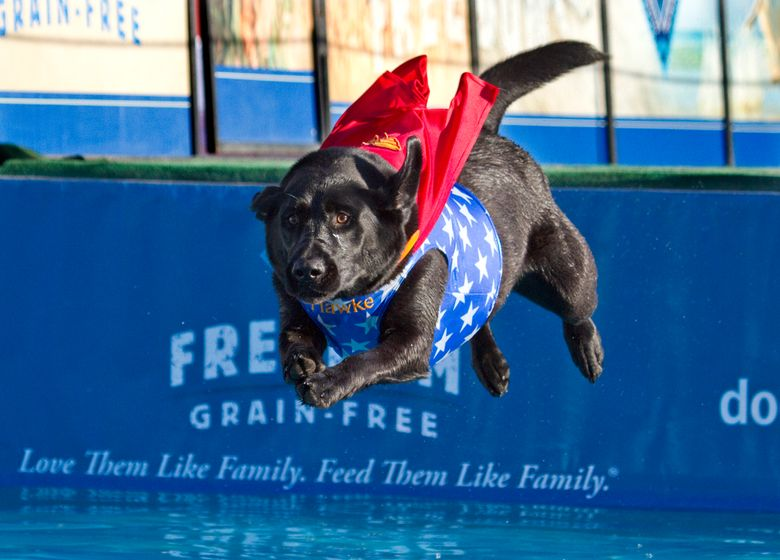 Dock Dogs will dive several times daily at the Washington State Fair Spring Fair in Puyallup.  (Patrick Hagerty/Patrick Hagerty)
