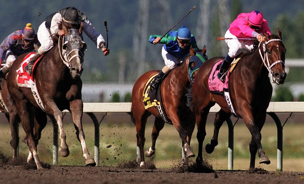Budroyale, ridden by Garrett Gomez, leads the pack on the homestrech of the Longacres Mile on Aug. 22, 1999. (Mike Barkin/The Seattle Times)