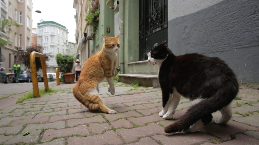 """The documentary """"Kedi"""" follows cats doing cat things in Istanbul."""