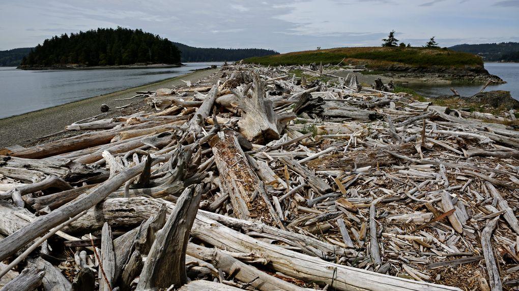Driftwood is strewn across beaches leading to Flagstaff Island on the Kukutali Preserve. At left is Skagit Island. (Ken Lambert/The Seattle Times)