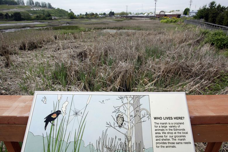Interpretive signs guide visitors through Edmonds Marsh. The Puget Sound Bird Fest is coming, with guided bird walks and volunteer-staffed viewer stations at various spots around Edmonds.  (Dean Rutz/The Seattle Times)