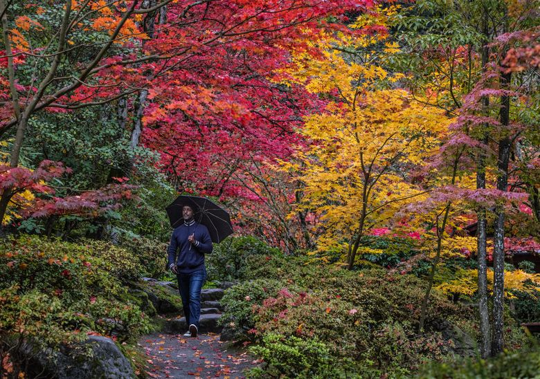 The Japanese Garden in the Washington Park Arboretum. (Steve Ringman/The Seattle Times)