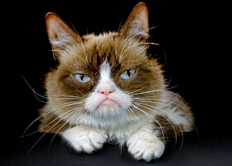 """FILE – This Dec. 1, 2015 file photo shows Grumpy Cat posing for a photo in Los Angeles.  Grumpy Cat is joining the cast of the Broadway musical """"Cats"""" on Friday, Sept. 30, 2016. The kitty with the comical frown """"will be worked into the end of the show and will become an honorary Jellicle Cat,"""" according to a spokesman for the show.  (AP Photo/Richard Vogel, File)"""