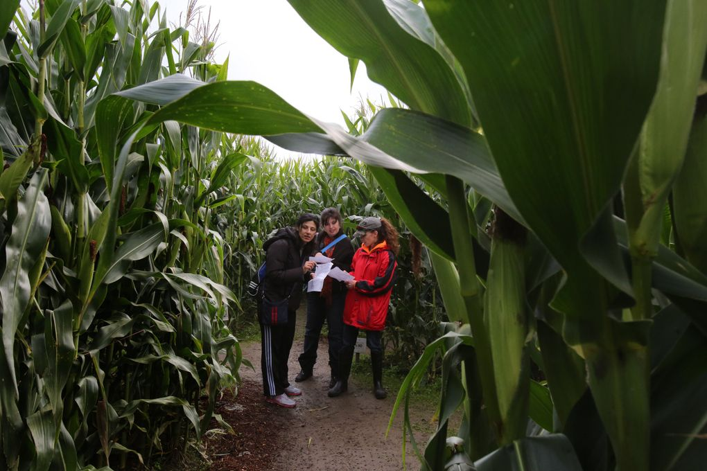 Mera Michael, left, Stephanie Stubson and Isabell Loew-Trozzo confer on which path to take in the 12-acre corn maze in the shape of Washington State.  (Alan Berner / The Seattle Times)