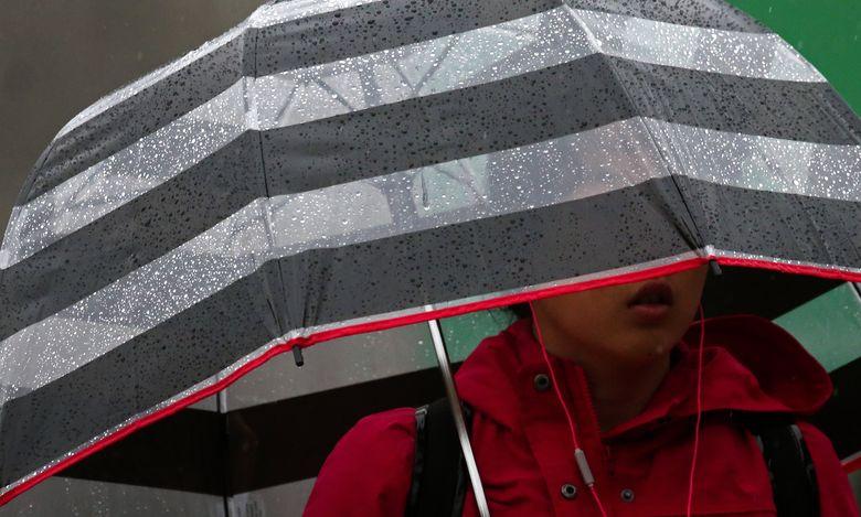 A pedestrian shields herself from a steady rain at the University of Washington on Thursday.  (Ken Lambert / The Seattle Times)