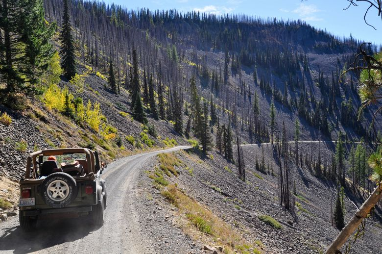 Searching for autumn color along a Forest Service road above Blewett Pass, where larches are abundant. (Jeff Layton photo)