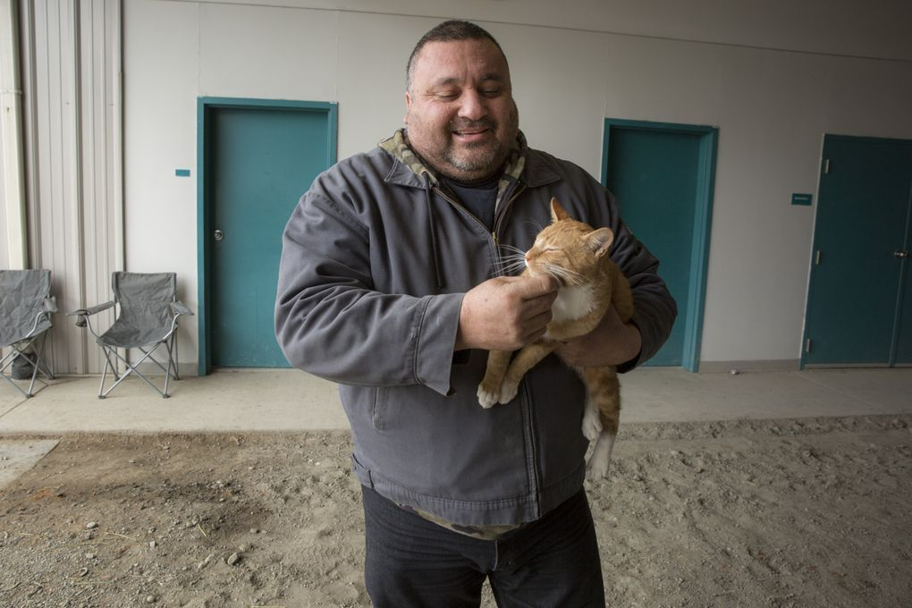 Trainer Martin Pimentel pets his barn cat, Garfield, in the stables. (Bettina Hansen/The Seattle Times)