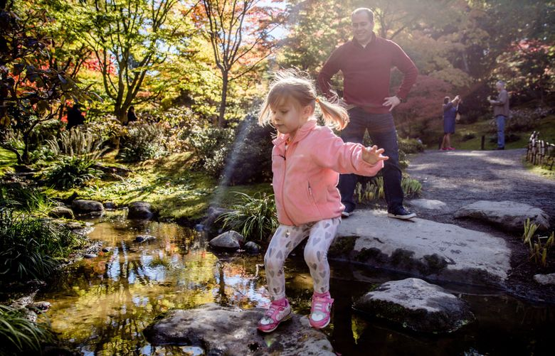 Winter Schmidt jumps across steppingstones under the supervision of her dad, Casey, during the 2018 Maple Festival at the Seattle Japanese Garden. (Rebekah Welch / The Seattle Times)