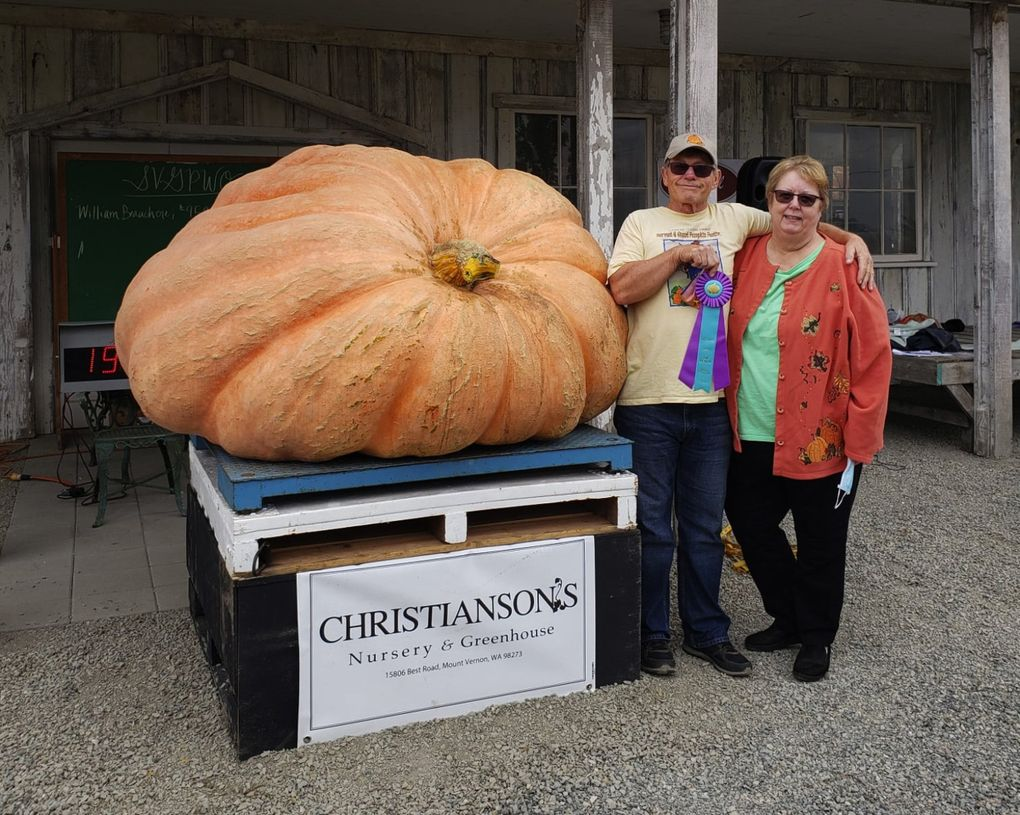 At the 2020 Skagit Valley Giant Pumpkin Festival, Joel and Mari Lour Holland grew the biggest pumpkin weighing in at 1,924 pounds.  (Stephanie Banaszak)